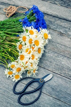 Making a bouquet of beautiful wild flowers of daisies and cornflowers on a wooden old