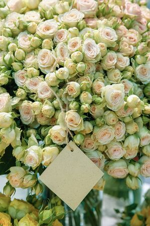 Roses of pink, salmon and mint-green flowers of modern varieties in a bouquet for a gift. Background. Selective focus. Wallpaper.
