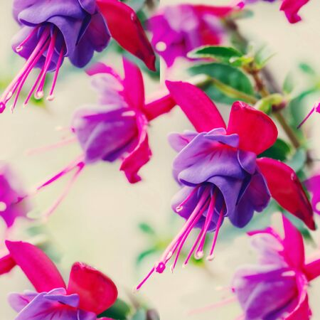 Pink delicate fuchsia flowers.