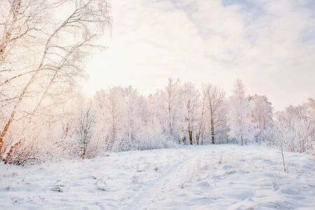 Beautiful winter Christmas landscape path leading to snow-covered trees at dawn. Seasonal features of winter.