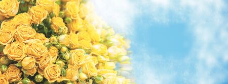 Romantic bouquet of beautiful delicate yellow roses on a blue background. Copy space. 免版税图像