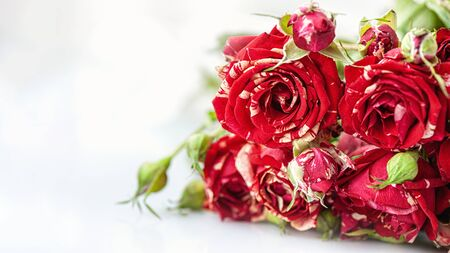 A bouquet of delicate variegated white-red medium-sized roses on a light background. Background of pink roses. Copy space