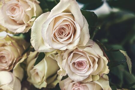 A bouquet of delicate greenish roses on a light background. Background of cream and pink roses.