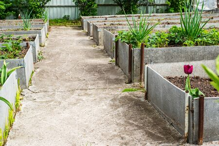 Growing vegetables in the city garden. Fixing a high bed of slate. Technology for growing vegetables on high beds.