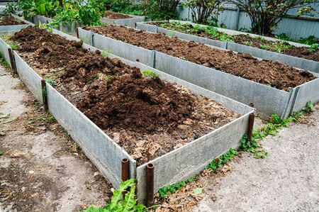 The vegetable bed is fertilized with manure in the autumn garden. Technology for growing vegetables on high beds.