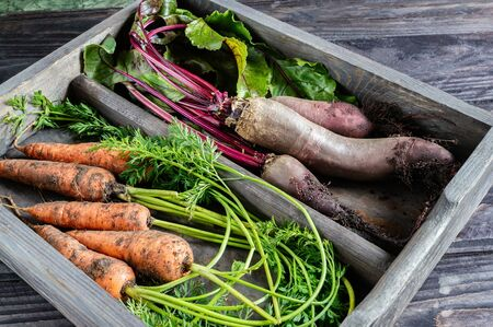 fresh beets and carrots are stored in a wooden box on the table. Close up.