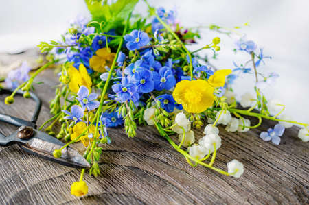 Composition with yellow Buttercup and forget-me-not on a wooden background. large rustic vintage scissors, a bouquet of wild flowers in a very old dark wooden box. real scene in the garden. natural light.
