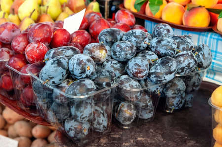 harvest of red and blue ripe plums is on the counter of the farmers  market. crop is for sale
