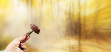 womans hand holds a large edible boletus mushroom against the background of a blurred birch deciduous forest Archivio Fotografico