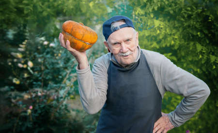 senior gardener with a pumpkin. Farmer 87 years old enjoys the harvest of pumpkins in the garden. Cheerful active old man in nature