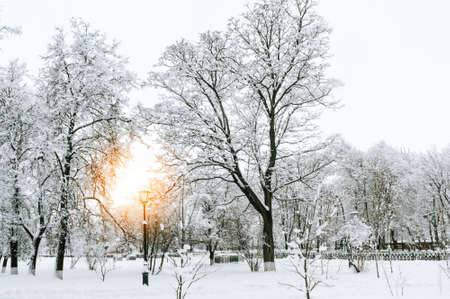 View of the winter Park in snowy weather. Snow-covered trees lanterns and paths. Seasonal changes in nature.
