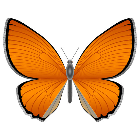 Isolated butterfly on the white background Vector