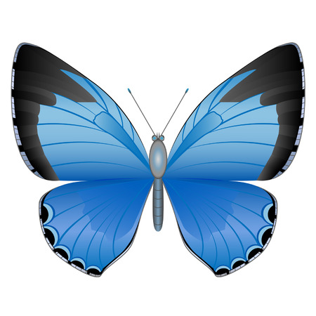 Isolated butterfly on the white background