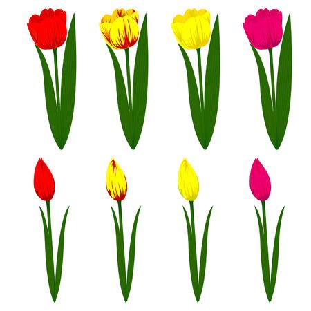 Aantal verschillende gekleurde tulpen Vector Illustratie