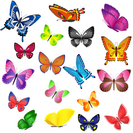 with orange and white body: Set of different colored butterflies Illustration