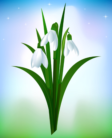 Spring snowdrop flowers background Illustration
