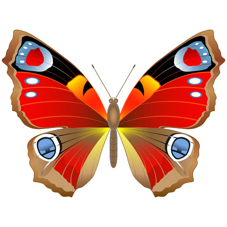 Colored summer butterfly Illustration