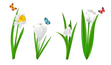 tulipe rouge: Ensemble de quatre Narcisse de fleurs de printemps, crocus, perce-neige et tulip Illustration