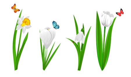 crocus: Set of four spring flowers narcissus, crocus, snowdrop and tulip