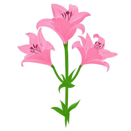 Painting pink lily on the white background