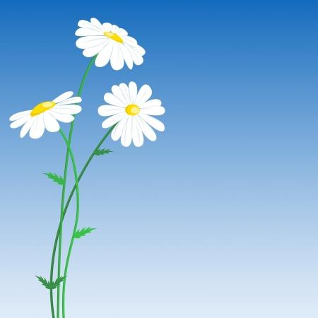 Set of three flowers on blue background