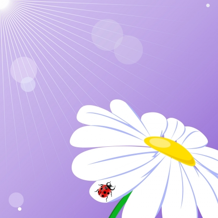 Camomile on the purple background