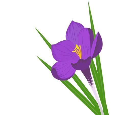 Spring-flower on the white background