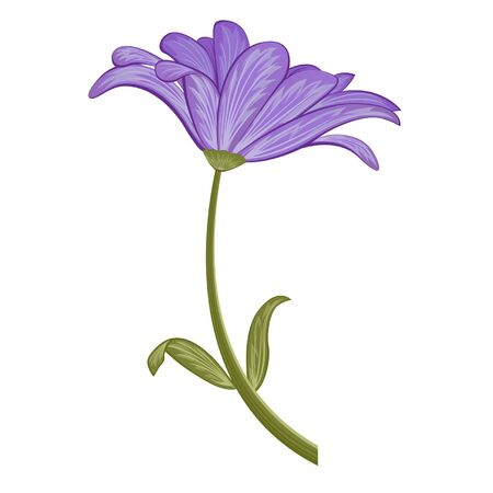 the petal: Purple flower on white background