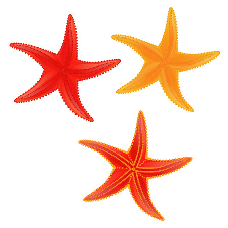 Set of colored starfish on the white background