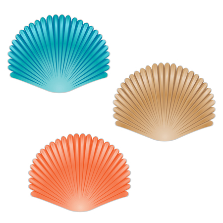 Set of different color sea shells Illustration