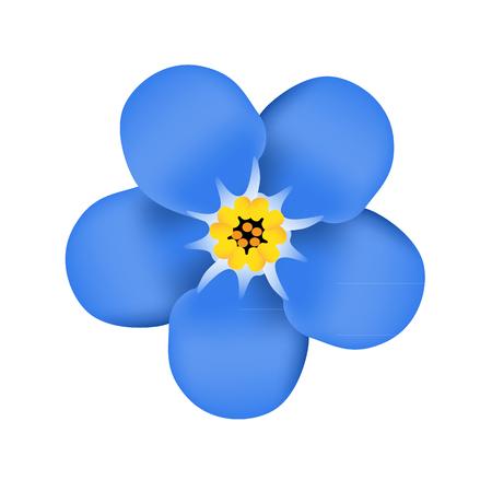 No me olvides flor de la flor. Flor azul. ilustración vectorial Ilustración de vector