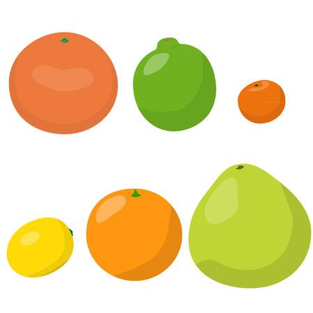 citrus: citrus fruits set vector Illustration