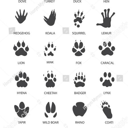 動物と鳥の足プリントのセットのベクトル図