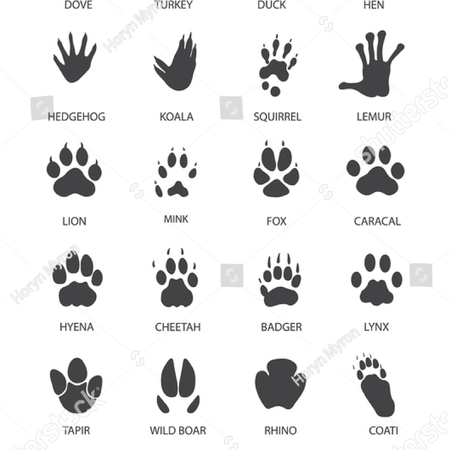 Vector illustration of Set of animal and bird Paw Prints