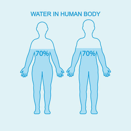 Water in human body. Water content charts percentage in human body. Vector illustration.