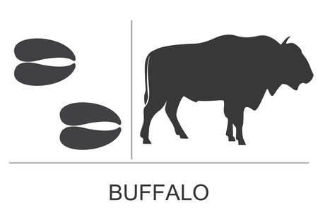 Silhouette and footprints of an American bison (Buffalo). Vector illustration on a white background. 矢量图像
