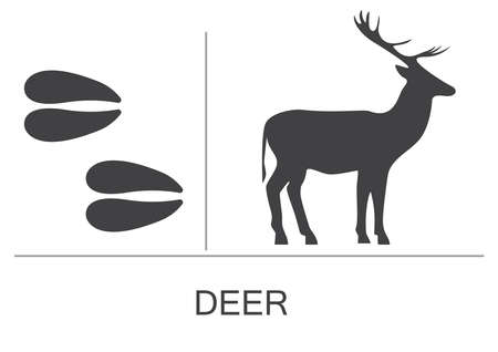 Deer silhouette and footprints. Vector illustration on a white background.