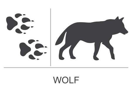 Silhouette and footprints of a wolf. Vector illustration on a white background.