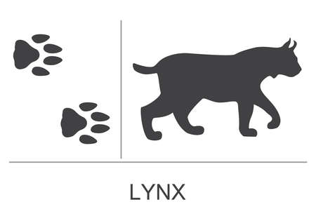 Lynx silhouette and footprints. Vector illustration on a white background.