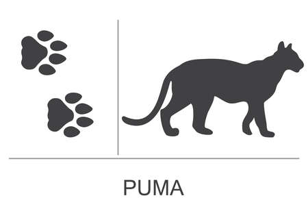 Silhouette and footprints of a puma (cougar). Vector illustration on a white background.