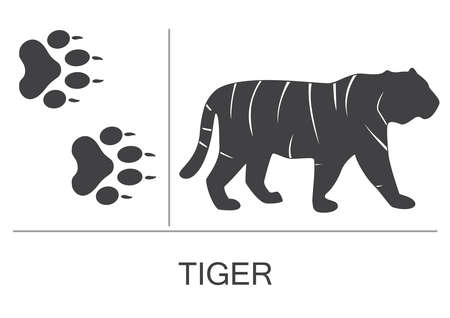 Silhouette and footprints of a tiger. Vector illustration on a white background.