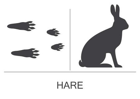Hare silhouette and prints of the hind and fore paws. Vector illustration on a white background.