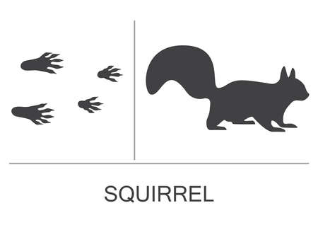 Squirrel silhouette and prints of the hind and fore paws. Vector illustration on a white background.