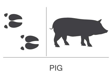 Silhouette and footprints of a pig. Vector illustration on a white background.