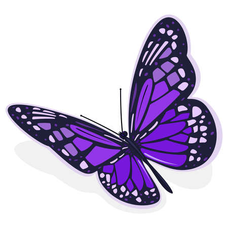 Dark purple butterfly. Vector illustration on a white background. 矢量图像