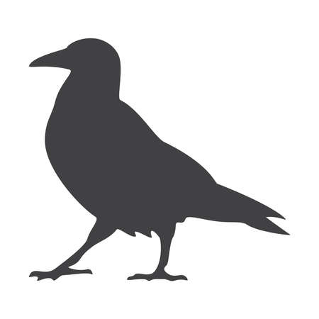 Crow silhouette, icon. Vector illustration on a white background.