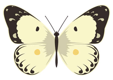 Yellow butterfly. Vector illustration on a white background. 矢量图像