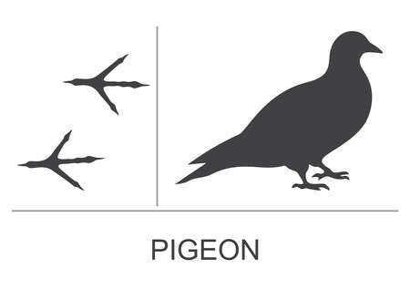 Silhouette and footprints of a pigeon. Vector illustration.