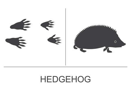 Hedgehog silhouette and prints of the hind and fore paws. Vector illustration.