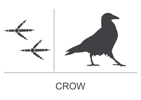 Silhouette and footprints of a crow. Vector illustration.